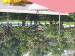 piscina a 15 metros