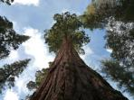 Big trees! Visit some of the world's oldest living things at the Mariposa Grove of Giant Sequoias, a 20 min drive or 7...