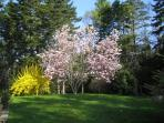Flowering trees and perennials are in the gardens. Great lawn for games and dogs.