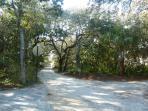 Seagrove's Oak Canopied Dirt Roads