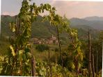 view of village from our grape vines