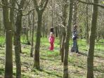 Explore the woodland walk at Brongwyn