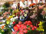 Cours Saleya Daily Flower Market