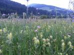 Frühlingswiese in Tassenbach