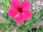 Vibrant Plants
