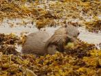 With luck you might spot some wildlife along the shore. This otter was photographed by a customer.