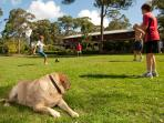 Dog friendly soccer on the lawn