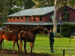Horses with lodge in background
