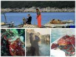 FISHING ; rock  fishing, diving, boat fishing