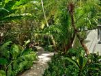lush tropical vegetation