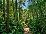 Lush Tropical Vegetation and Walkway