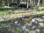 Outside Fire Pit