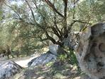 In your private garden: rocks to climb under the shadow
