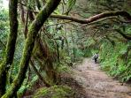 'Anaga' The most protected natural area of Tenerife (close from the apartment, only 17 km)