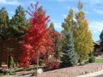 Beautiful trees with their fall colors on Cottage Loop. October 2014 (Across the street).