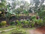 Our Tropical Garden, palms, bananas, spices.