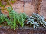 Herbs garden at Villa Nuba for our italian meals