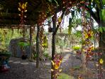 Stroll garden to see various exotic flowers and enjoy the fragrances of paradise
