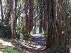 Trailway to Shipman's beach