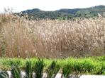 Fields