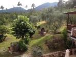 Over looking the Olive Groves