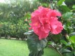 A flower from the garden