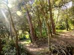 Bosque particular