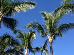 Maui is a feast for the senses. Vivid blue sky, fragrant trade winds, swaying palm trees. Come Enjoy