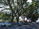 Mossman Market and Amazing Rain Trees 5min from House