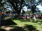 Mossman Markets 7am  Saturday Port Douglas Markets 9am