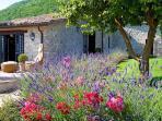 Fragrant lavender beds in the villa's garden