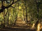 An enchanting woodland path close to the villa
