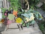 Our garden produce!