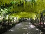 Laburnum Arch Bodnant Gardens nearby