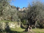 L'oliveraie du Domaine Saint Sauveur à Grasse