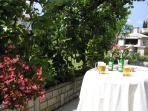 terrace in shadow of an old kiwi tree. Cheers!