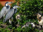 Birdlife in Zimbali