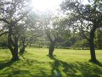 The Orchard from the terrace of Orchard View Cottage