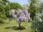 Lovely garden to enjoy