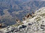 Wild life in the local nation park mountains
