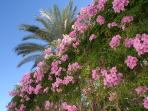 La Maestranza garden