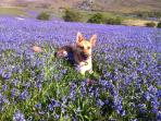 Yes we are dog friendly! And May is bluebell time at Greator rocks.