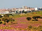 Castro Verde is a carpet of colours in the spring
