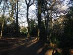 Enjoy walks through Tullymore Forest Park