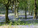 Carmarthenshire is well wooded and stunning in the spring.
