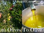 we produce own olive oil, as well as red vine and brendy