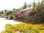 Turquoise Resort in full bloom