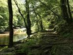 A shady walk along the river