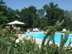 Swimming pool, view through plants