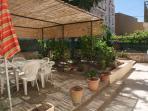 vue jardin (citrons, raisins fin août)